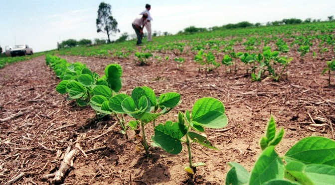 La erosión del suelo, un daño ambiental que vuelve a aumentar