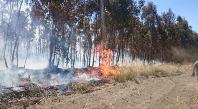 Se promulgó la ley que impide el desarrollo inmobiliario de bosques nativos afectados por incendios forestales